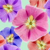 Mallow, malva. Seamless pattern texture of flowers. Floral backg Royalty Free Stock Image