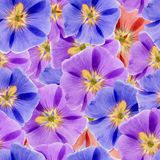 Mallow, malva. Seamless pattern texture of flowers. Floral backg Royalty Free Stock Photo