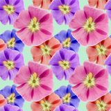 Mallow, malva. Seamless pattern texture of flowers. Floral backg Stock Photography