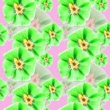 Mallow, malva. Seamless pattern texture of flowers. Floral backg. Mallow, malva. Texture of flowers. Seamless pattern for continuous replicate. Floral background Stock Photo