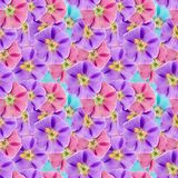 Mallow, malva. Seamless pattern texture of flowers. Floral backg Royalty Free Stock Photography