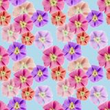 Mallow, malva. Seamless pattern texture of flowers. Floral backg Royalty Free Stock Photos