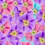 Mallow, malva. Seamless pattern texture of flowers. Floral backg Stock Images
