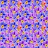 Mallow, malva. Seamless pattern texture of flowers. Floral   Stock Photos
