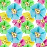 Mallow, malva. Seamless pattern texture of flowers.   Royalty Free Stock Photos