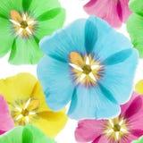 Mallow, malva. Seamless pattern texture of flowers.   Stock Photo