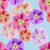 Mallow, malva. Seamless pattern texture of flowers.  Royalty Free Stock Photography