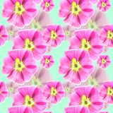Mallow, malva. Seamless pattern texture of flowers. Floral. Mallow, malva. Texture of flowers. Seamless pattern for continuous replicate. Floral background Stock Photo