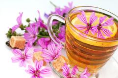 Mallow tea. Fresh tea with flower of mallow Stock Photo