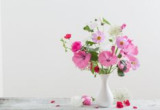 Mallow in vase on white background. The mallow in vase on white background Royalty Free Stock Photos