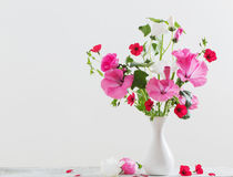 Mallow in vase on white background. The mallow in vase on white background Stock Images