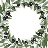 Mallram från Olive Branches Royaltyfri Bild