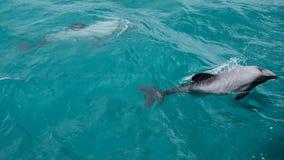 Malmène des dauphins Images libres de droits