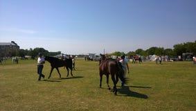 Malmö Horse Show Royalty Free Stock Image
