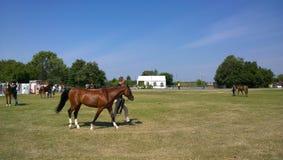 Malmo hästshow Royaltyfri Bild