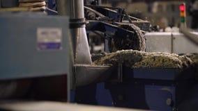Malningmaskin på sågverket, wood bransch stock video