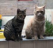 Malos gatos foto de archivo