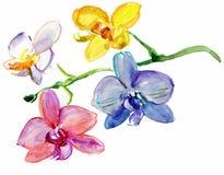 Malować akwareli orchidee Zdjęcia Stock