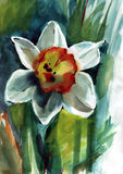 Malować kwiaty Zdjęcia Stock