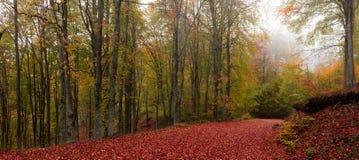 Malownicza lasowa ścieżka obraz stock