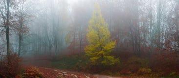 Malownicza lasowa ścieżka obrazy royalty free