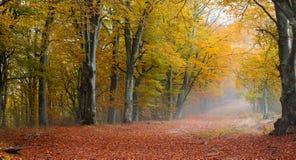 Malownicza lasowa sceneria zdjęcie stock