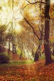 Malowniczej jesieni lasowa sceneria z promieniami miękki światło Obraz Stock