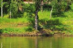 Malowniczy bank jeziorny las Fotografia Royalty Free