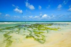 Malowniczy brzegowy Diani Fotografia Royalty Free