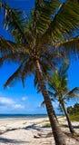Malowniczy brzegowy Diani Zdjęcia Royalty Free