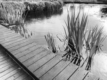 Malowniczy drewniany przejście wzdłuż jeziornego brzeg w Rishon Le Zion Zdjęcie Stock