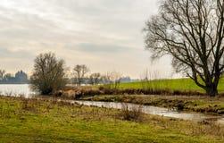 Malowniczy Holenderski rzeka krajobraz w z tło kasztelem zdjęcie stock