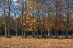 Malowniczy jesień las wzdłuż rzeki przeciw jaskrawemu niebieskiemu niebu Obraz Stock