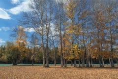Malowniczy jesień las wzdłuż rzeki przeciw jaskrawemu niebieskiemu niebu Zdjęcie Royalty Free