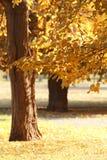 Malowniczy krajobraz jesień park zdjęcia royalty free