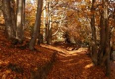 Malowniczy krajobraz z jesień lasem zdjęcia stock