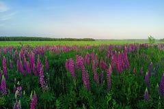 Malowniczy krajobraz z kwiatami, polami i lasami w wsi, zdjęcie stock