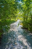 malowniczy strumień wśród drzew na słonecznym dniu fotografia royalty free
