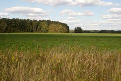 Malowniczy zieleni pola Fotografia Royalty Free