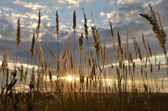Malowniczy zmierzchu jaśnienie przez wysokiej trawy Zdjęcie Royalty Free
