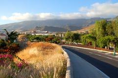 Malowniczy znakomity krajobraz piękni kurortów lasy Americas na Tenerife, wyspy kanaryjska, Spain zdjęcie royalty free