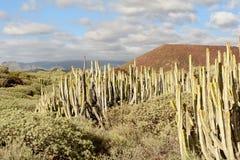 Malpais de Guimar, Tenerife royalty free stock image