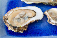 Malpaque Oyster Stock Photo