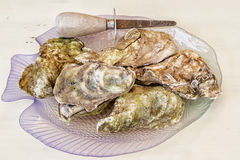 Malpaque Oyster. A plate of Malpaque oysters and an oyster knife Stock Images