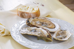 Malpaque Oyster. Raw Malpaque oysters on the shell Stock Photo