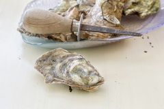 Malpaque oysters Royalty Free Stock Images