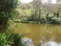 Duck pond stock photos