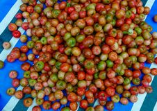Malpighia glabra red acerola fruits. Malpighia glabra red acerola tropical fruits at local market in Mekong Delta, Vietnam Stock Photo