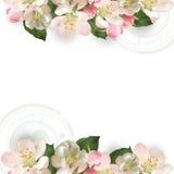 Malplaatje met de boom van bloemenapple Royalty-vrije Stock Foto's