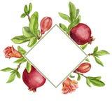 Malplaatje met de takken, de bladeren, de bloem en de granaatappels van de fruitboom Stock Afbeeldingen